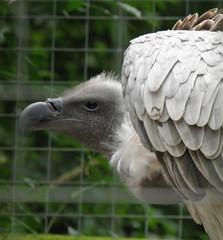 Rutland Falconry Owl Centre