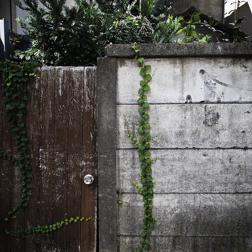 Yoyogi Back Door with Vines