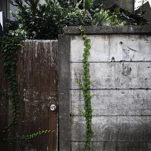 Yoyogi Back Door with Vines