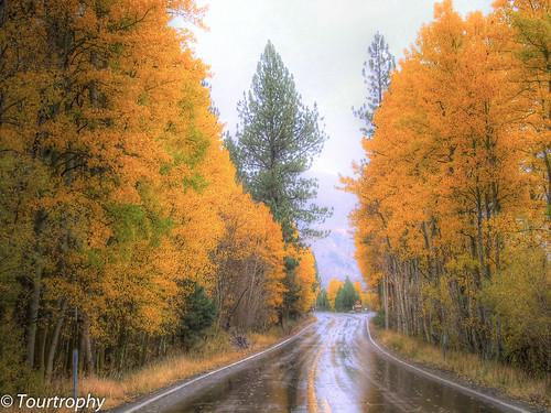 Rainy Autumn (Explore #226, Sept 21, 2013)