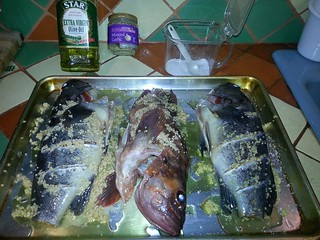 Fish before cooking