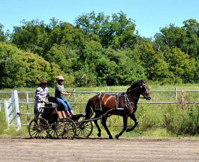 Carriage On Mud Road Rock Island Il