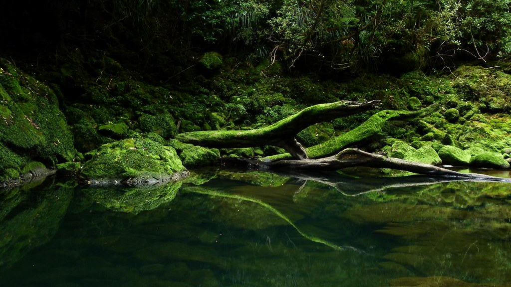 Bullock Creek, Paparoa National Park, West Coast, New Zealand