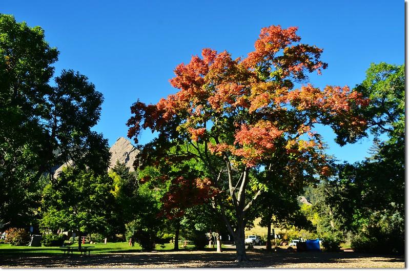Sugar maple in Fall, Chautauqua, Boulder 5