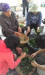 和達魯瑪克婦女會學習野菜知識。(攝影:林宜賢)