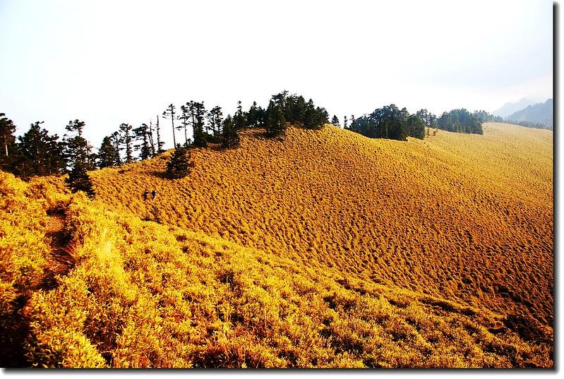 玉山南峰西稜東側草原坡 2