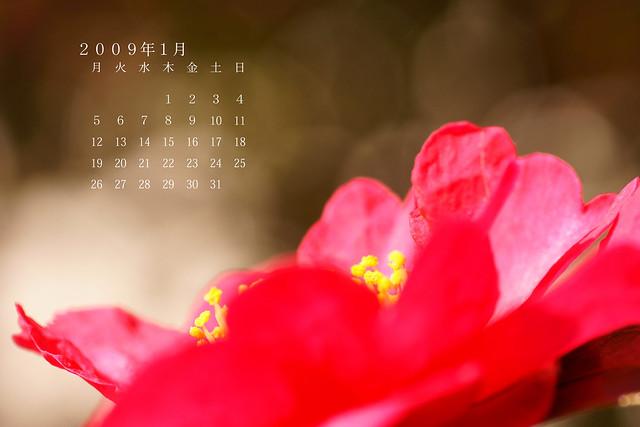 写真_1月カレンダー