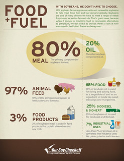 Food and Fuel Breakdown of a Soybean Infographic