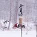 Current Status: SNOW by RangerRick