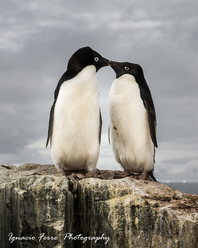 Antarctic Valentine´s day