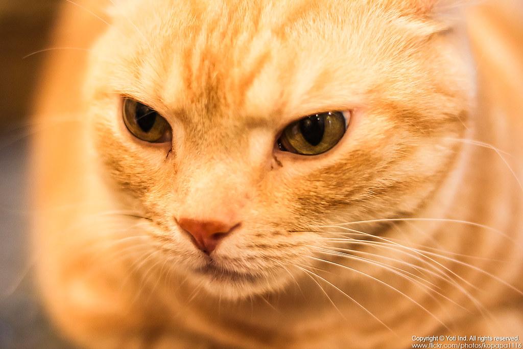 元氣貓主題餐廳 IMG_6051