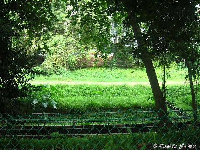 Ghim Moh KTM Railway 01