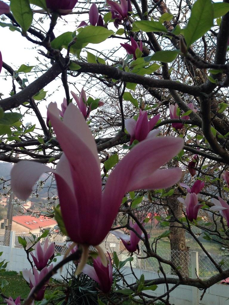 Flores [170/365]