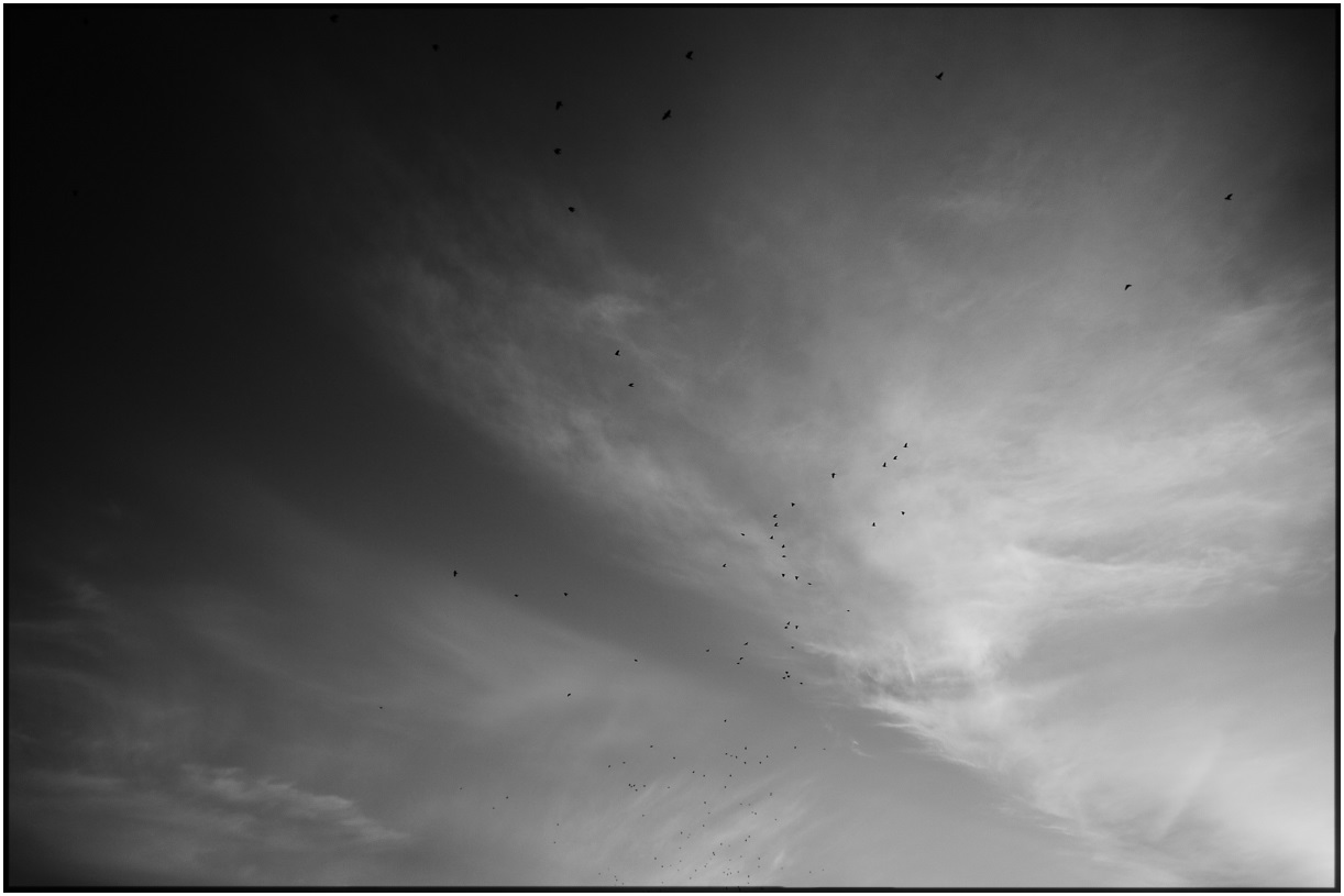Birds in Blanco & Negro
