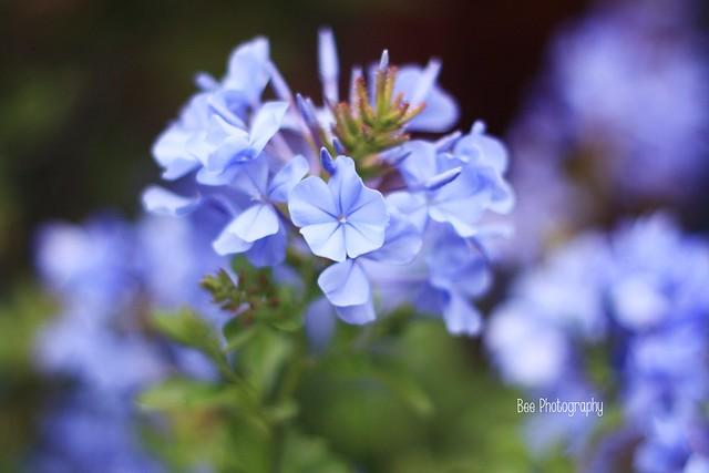 Azzurro Polvere