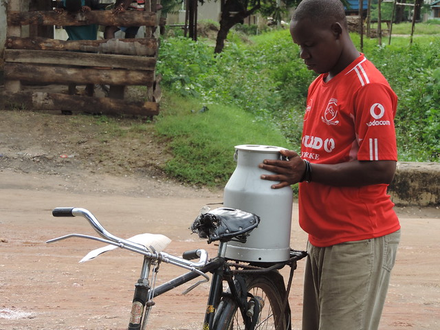 Transporting fresh milk to a collection site in Pongwe, Tanzania.