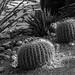 Cactáceas por daniel.olguinr