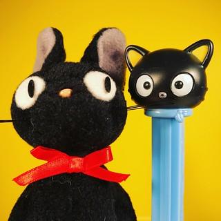 Kitty Cousins