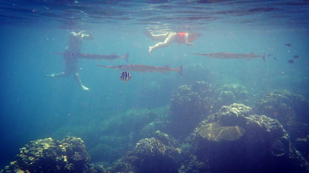 El mundo submarino es...otro mundo ??(y si, lo de atrás es una ballena...) #pezespada #underwater #swordfish