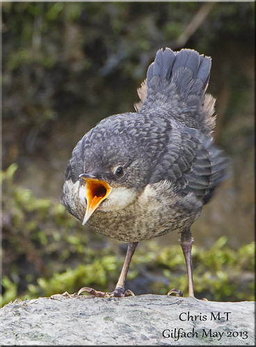 avianexcellence