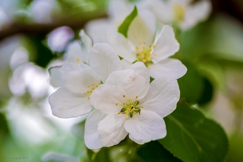 Spring flowers 03