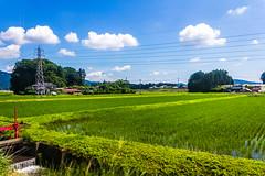 夏っぽい写真うpスレ用(彩度上げまくり)