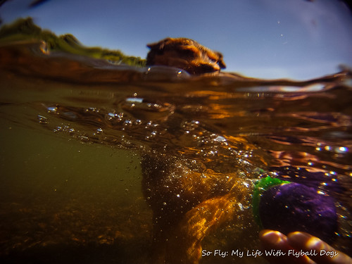 GoPro Under Water-6019
