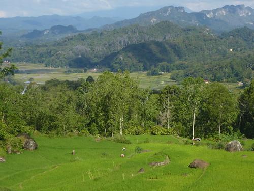 Sulawesi13-Lo'ko Mata-Tikala (18)