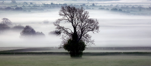 uk morning trees mist tree wales landscape dawn interestingness gallery britain farm cymru ivy explore hedge caerdydd agriculture levels canoneos5d explored wentloog stevegarrington