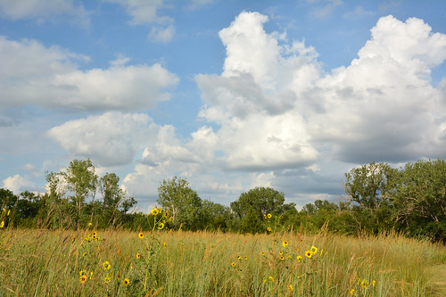 clouds sunflowers cumulus kansas prairie wichita chisholmcreekpark