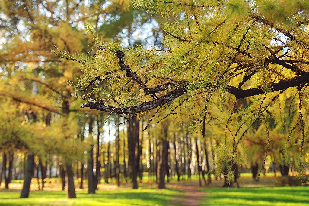Autumn 06