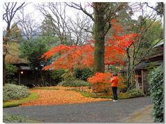 * Autumn Scenery