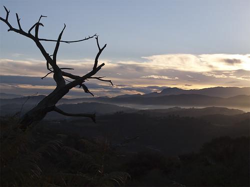 tree sunrise dawn asturias amanecer árbol asturies langreo llangréu peñamayor llangreando vueltaalangreo picovilla santomedero