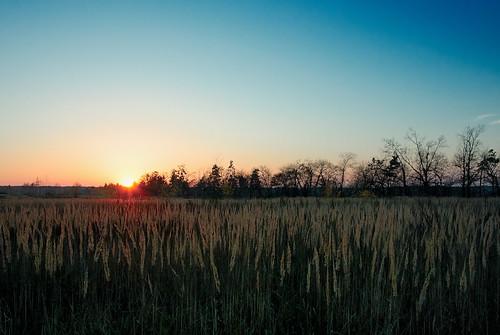 "wood autumn sunset sky sun tree field landscape nikon day ukraine clear explore nikkor epic vadim autofocus beldy greatphotographers nikon1 abigfave 1v1 nikkor10mmf28 nikonone flickrestrellas ""nikonflickraward"" nikon1v1 vadimbeldy"