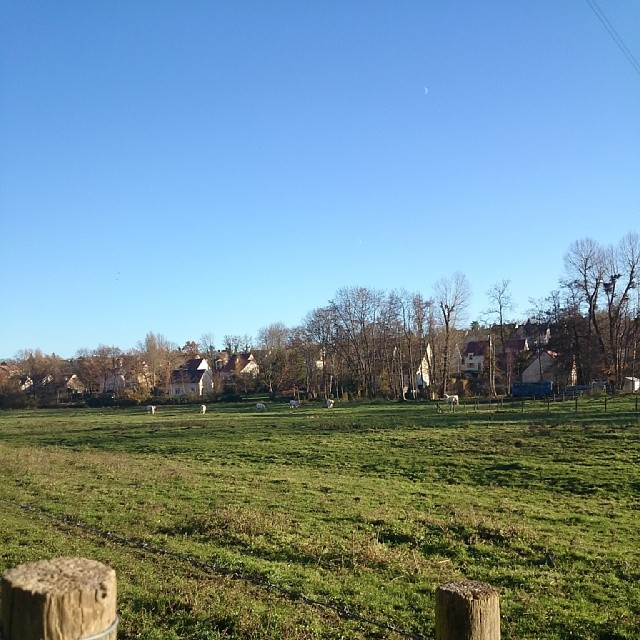 De vraies vaches franciliennes à moins de 2 km de la maison