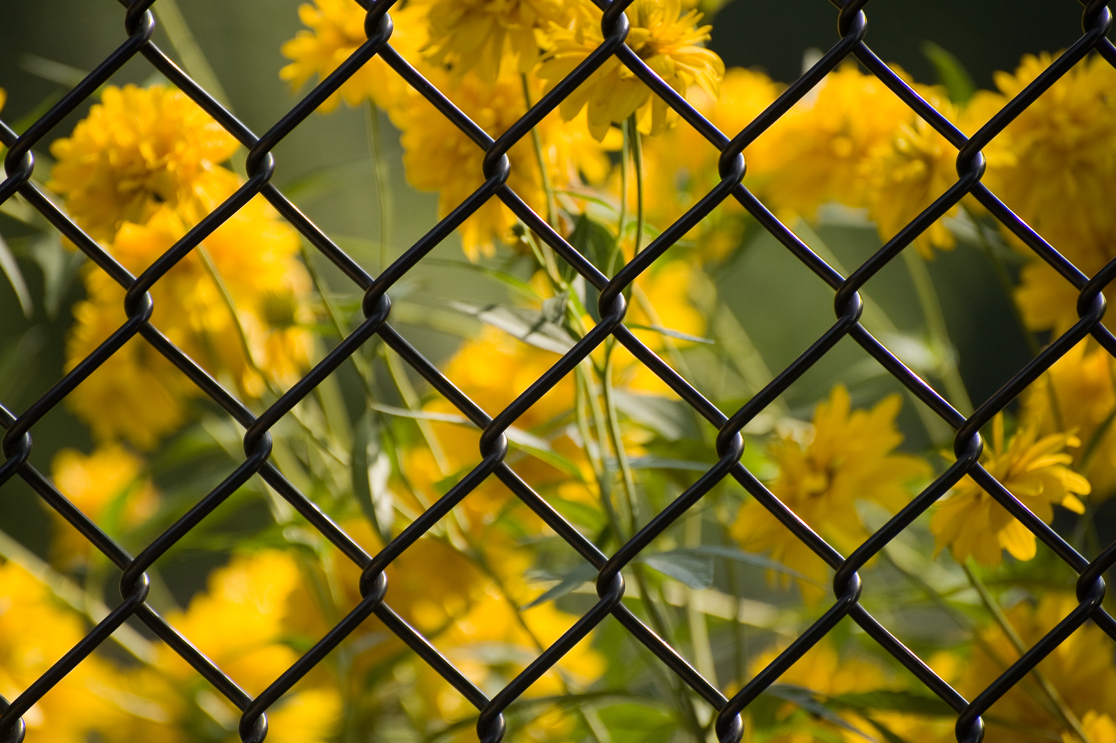 Caged Beauty #1