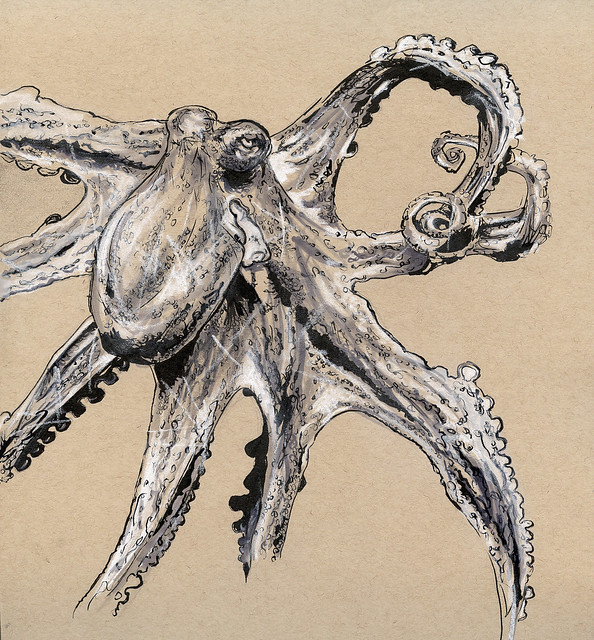 The Octopus-2