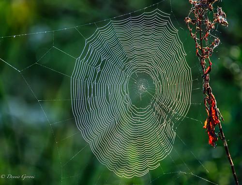 background closeup landscape orlandowetlands spiderweb web christmas florida unitedstates us