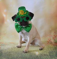Happy St. Patrick's Day! Love, Le Boo