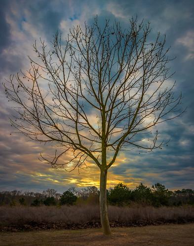 nx500 samsungnx500 rokinon12mmf2 garrardlandingpark roswellga sunrise sunset tree