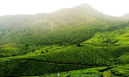 green lush gardens tea forest meadow landscape nature hills mountains sky