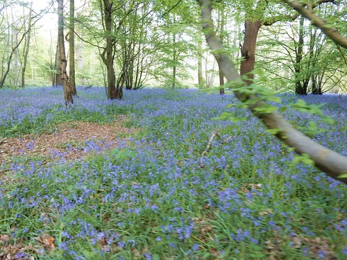 Blue remembered bells