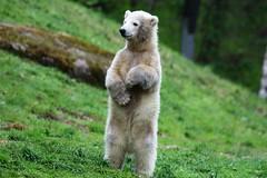 Zoo Visit Spring 2017