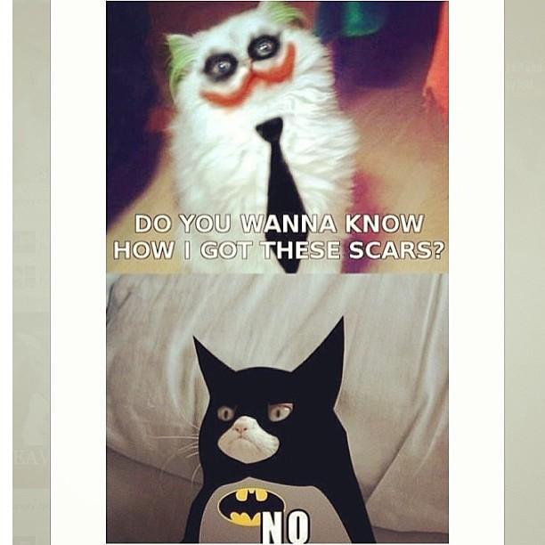 Orheyn Lay Lay Joker Version Song Download: Wanna See How I Got These Scars? NO! #grumpycat #no