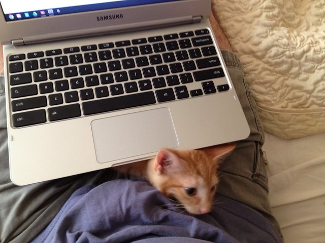 Samsung Chromebook and Cat