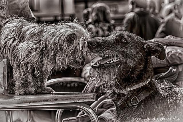 ¿Te acuerdas cuándo nos conocimos? éramos los perrosflautas más felices de la plaza.