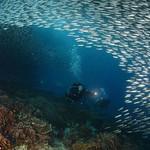 sardines moalboal