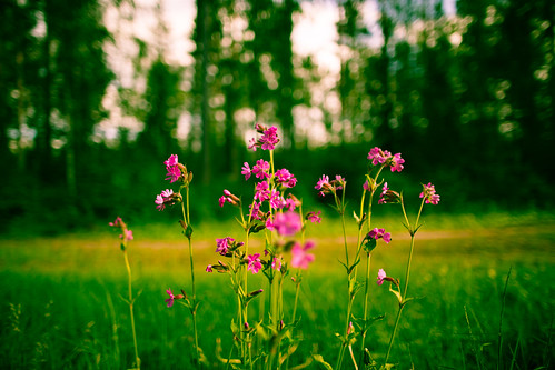 travel flowers blue summer green slr nature colors digital forest canon finland landscape photography eos photo europe flickr view purple image photos bokeh pics vibrant perspective picture vivid pic photographs shutter dslr 5dmkiii 5dmarkiii youperspective
