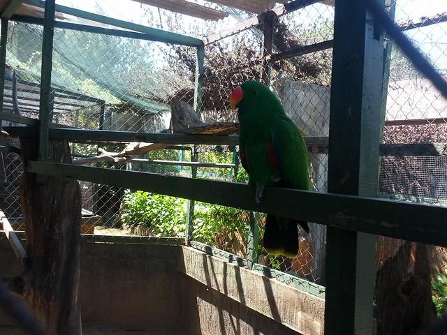 Зеленый лори