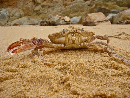 angry crab